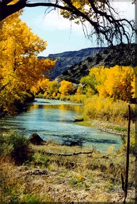 Trout Fly Fishing New Mexico